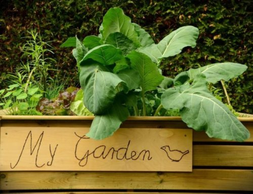 Tipps für den Gemüseanbau im Hochbeet